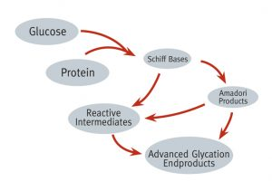 Diagram - Creation of AGEs from Glucose